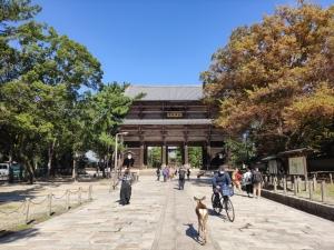 Nara202010-322